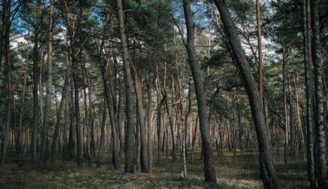 Maģiskie augi, kuri aizsargā no ļauna: uzzini, kurš koks ir tavs aizbildis