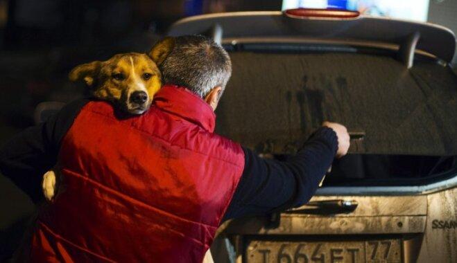 Foto: No Sočiem izved suņus