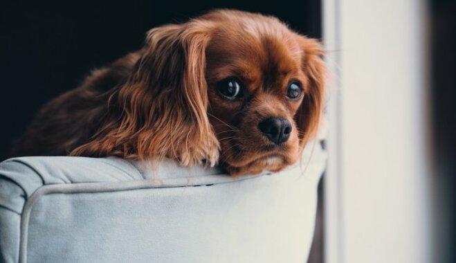 Deviņas saimnieku rīcības, kas suņus īpaši neiepriecina
