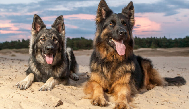 Most Popular Breeds Of Dogs In Us
