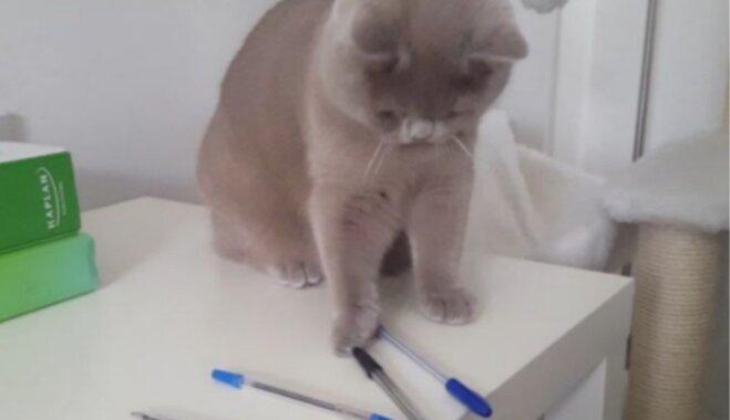 Video: Nešpetns kaķis no galda nogrūž visas pildspalvas