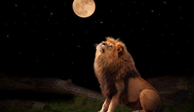 Сексуальные отклонения мужчин под знаком льва
