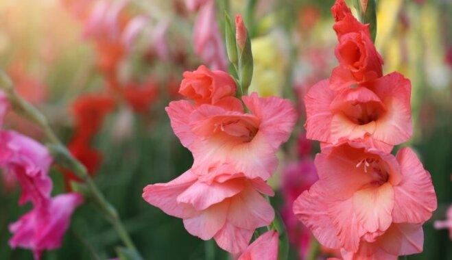 Смертельная красота: ядовитые растения, которые растут почти в каждом саду