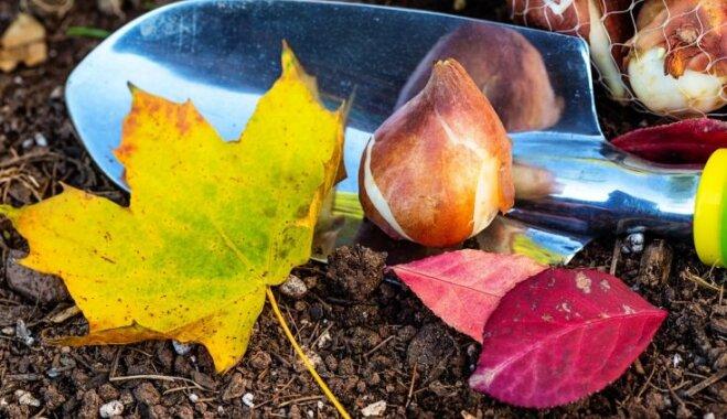 Какие цветы сажают осенью в саду?