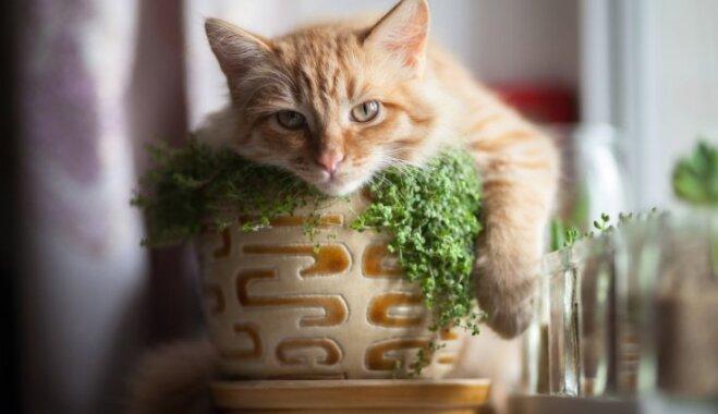 10 комнатных растений, безопасных для домашних питомцев