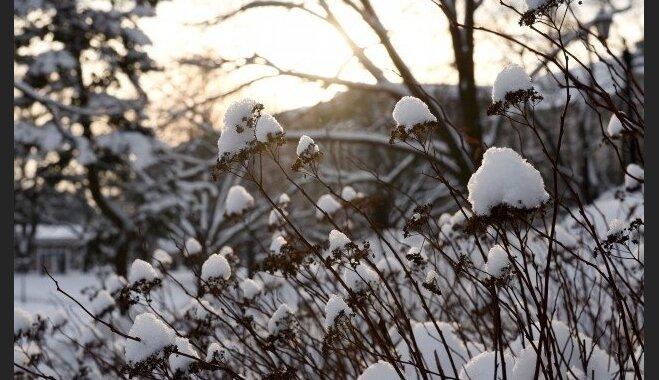 Зимнее лечение деревьев в саду: что и как можно сделать?