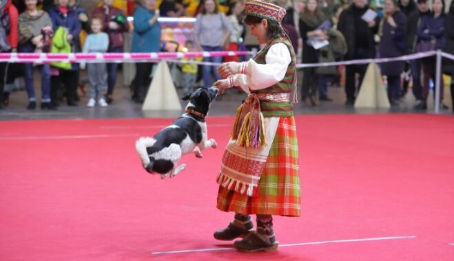 Foto: Dejas ar suņiem un reti dzīvnieki Ķīpsalā