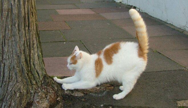 Ko darīt, ja kaķis skrāpē mēbeles?