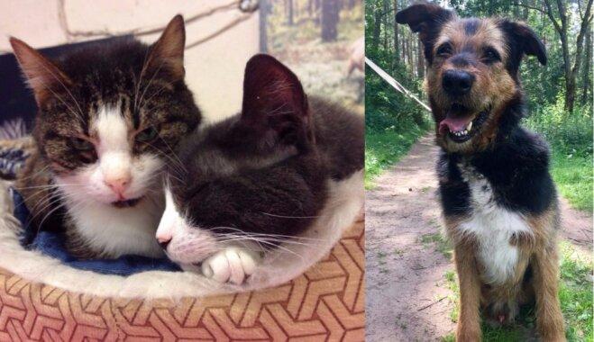 'Sarunāties vienā valodā' – mājas meklē suņuks Muhtars un divi mīļi runči