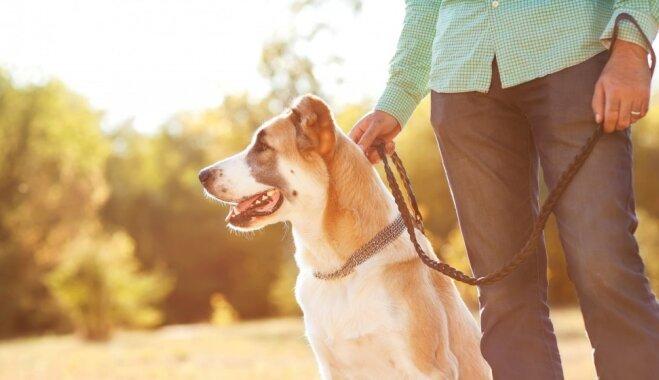 Četri iemesli, kāpēc doties garās pastaigās ar savu suni