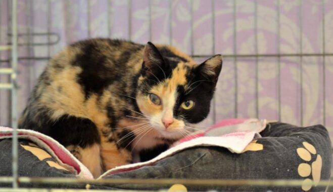 Slepus pamestā Debora un vēl trīs mīļi kaķi meklē uzticamus saimniekus