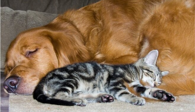 Vai kaķis spēj sadzīvot ar citiem mājdzīvniekiem