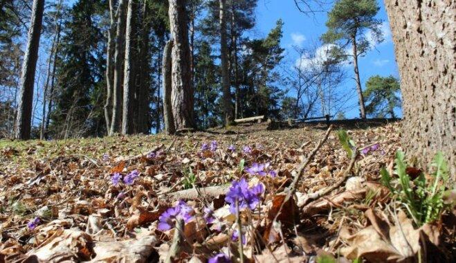 Тайные красоты: природная тропа Картавкална и древнее латышское поселение рядом с Яунпилсом