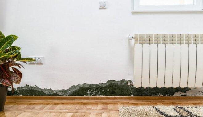 Mājokli apsēdis pelējums – speciālista ieteikumi, kā no tā atbrīvoties
