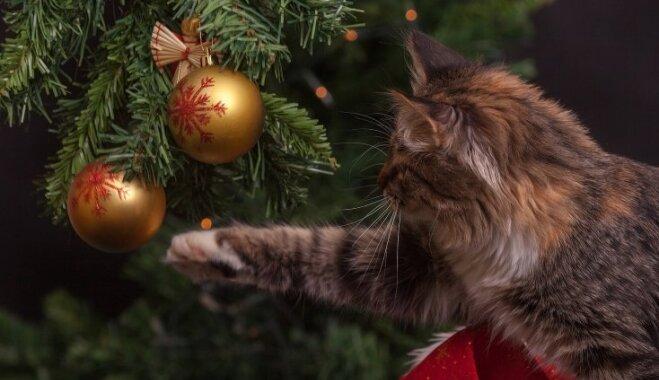 Безопасный праздник: елки, игрушки и другие угрозы нашим питомцам