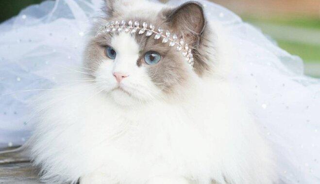 Foto: Kā no pasaku grāmatām – četrkājainā princese Aurora, par kuru cīnījās saimnieki