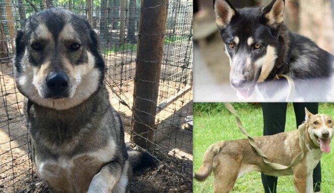 Trīs mīļas suņu dāmas meklē sev mājas
