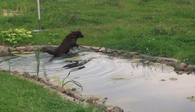 Nepieskatīts suns iemaldās kāzās Lietuvā un izpeldas dīķī