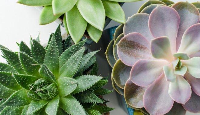 10 причудливых комнатных растений, о которых вы не знали