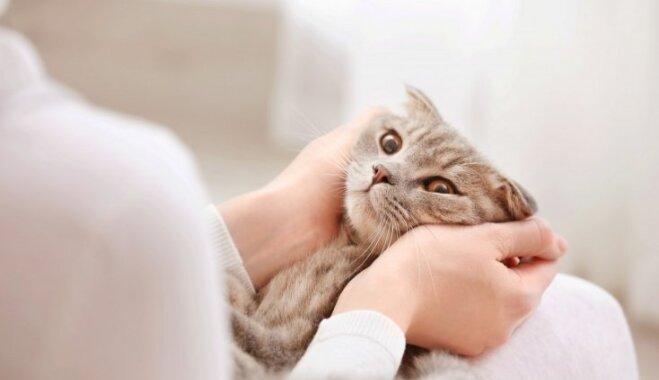 Sešas kaķa darbības, par ko katrs saimnieks var būt pateicīgs