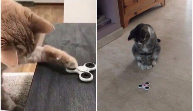 Video: Kā kaķi reaģē uz grozāmgrābsli
