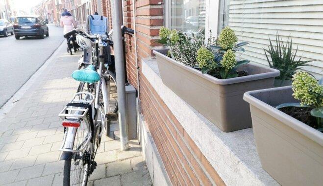 Studenti un alus Beļģijā: ko apskatīt Lēvenā, kur jau februāra sākumā zied krokusi