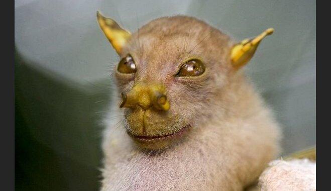 Desmit dīvainākie jaunatklātie dzīvnieki