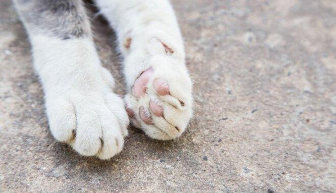 'Tā varēja arī nenotikt' – aicina ziedot kaķu sterilizācijai, lai mazinātu kaķēnu skaitu