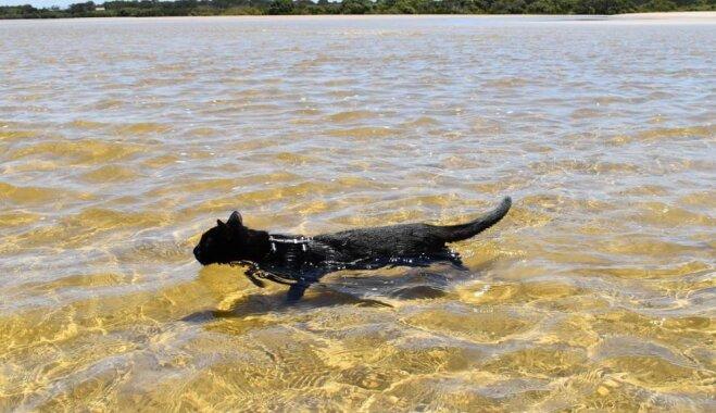 Netipiskā Nātana, kura apgāž priekšstatus par kaķiem un peldas ūdenī