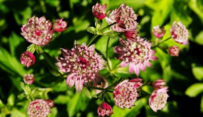 Augu ziemcietība un salcietība – kāpēc svarīgi tās ievērot un nesajaukt