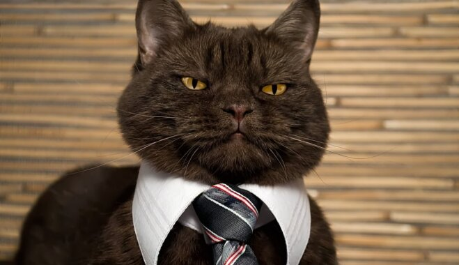 10 профессий, в которых кошки превзошли людей