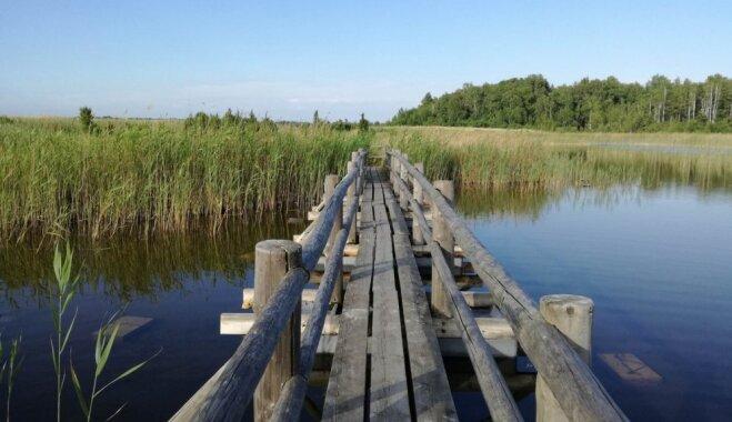 ФОТО. Необычная тропа сквозь тростник на озере Каниерис