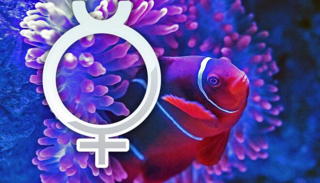 Merkurs ieiet Zivju zīmē. Ko tas mums nesīs?