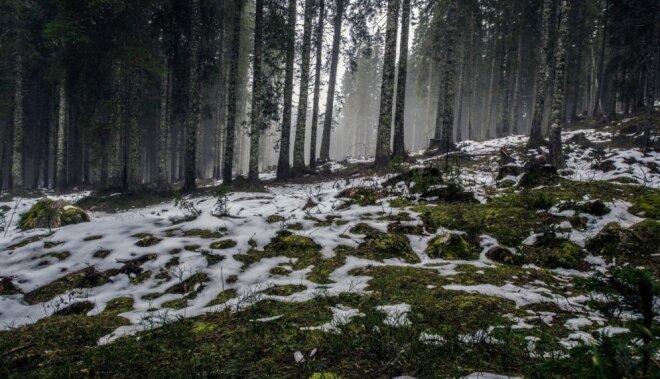 Pavasara saulgriežu astroloģiskā prognoze Latvijai