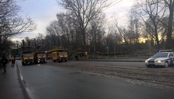 Ģimene par mata tiesu izglābjas no krītošā koka Slokas ielā