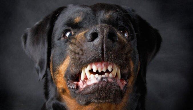 Почтальоны в группе риска: на них нападают собаки, за год пострадали 19 сотрудников