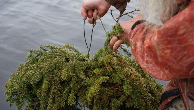 Zivju nārsta tiešraide no mākslīgās ligzdas: ūdens temperatūras dēļ ikru vēl nav