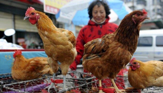 Ķīnas seismologi darbā sākuši izmantot cāļus, zivis un krupjus