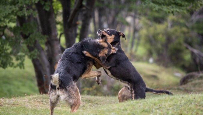 Speciālistu padomi un saimnieku pieredzes stāsti, kā tikt galā ar agresīvu mājdzīvnieku