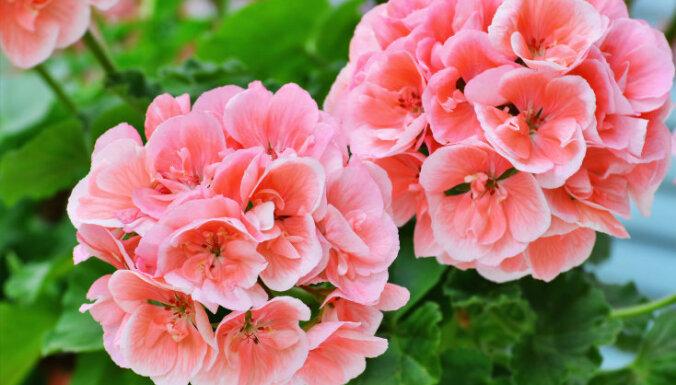 11 лучших ампельных цветов и растений для сада