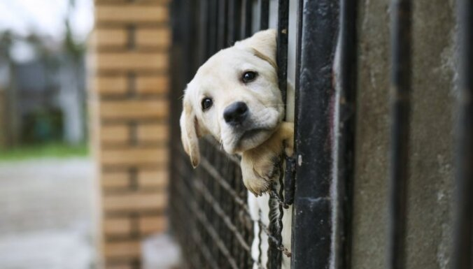 Начинается акция Купи, пожертвуй, накорми для поддержки питомцев в приютах для животных