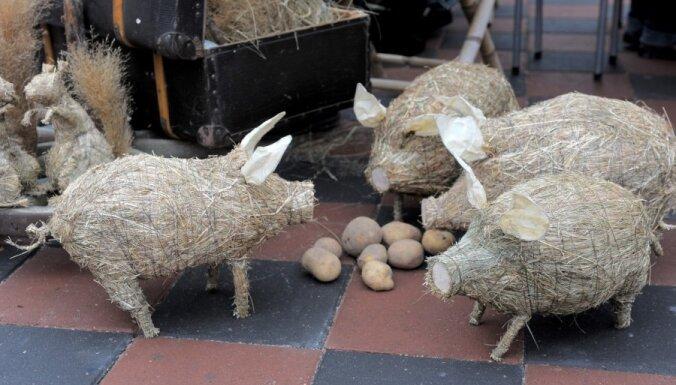 Fotoreportāža: rīdzinieki bauda Kartupeļu festivālu un lauku labumus