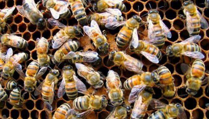 Kuldīgas pusē apzog baznīcas ziedojumu kastīti un bišu stropu