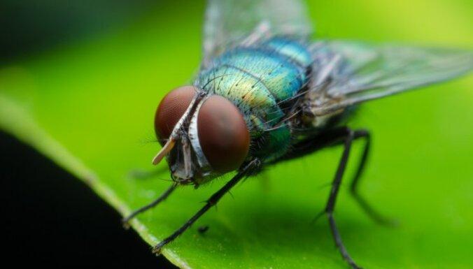 Пенсионер взорвал во Франции дом при попытке убить муху