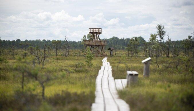 ФОТО. Через лес, мимо бобровой плотины и озер – прогулка по природной тропе болота Васениеку