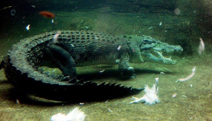 """Футболист """"Баварии"""" пошутил, что его укусил крокодил"""