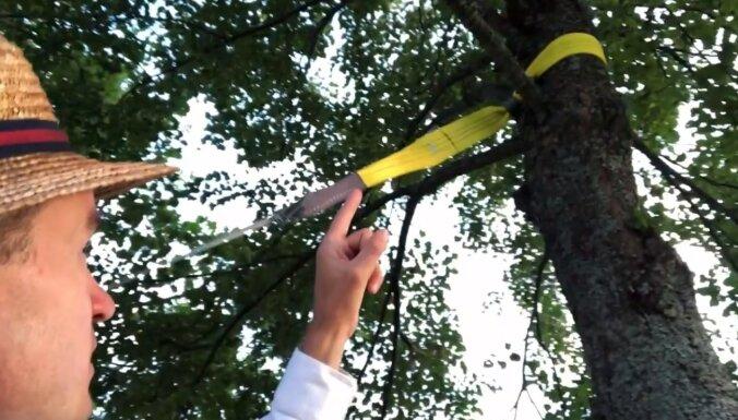 Video: Kā dabai draudzīgi kokā piestiprināt šūpuļtīklu