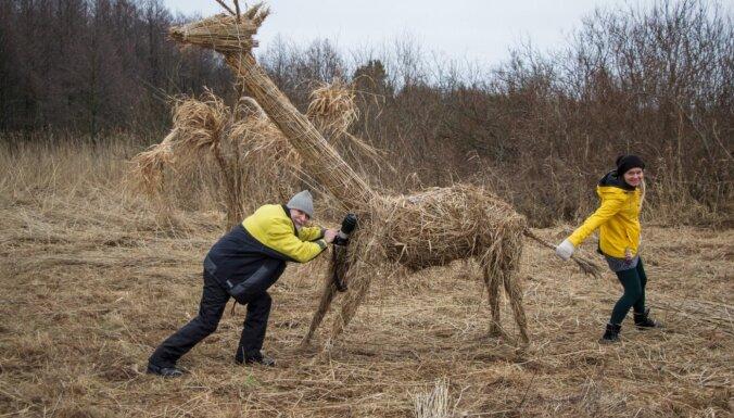 Foto: Neparastās niedru skulptūras dabas liegumā 'Randu pļavas'