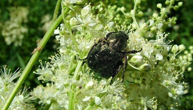 Šlīteres bākas pakājē atklās jaunu dabas izziņas objektu – Kukaiņu taku