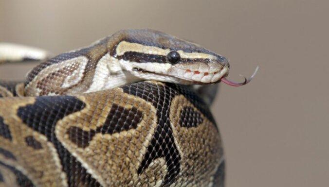 В доме американского учителя нашли 400 змей (фото, видео)